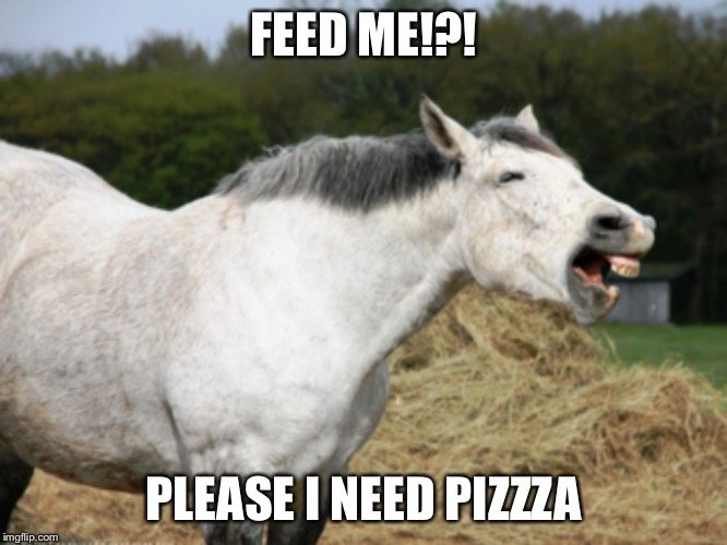 Pizza | FEED ME!?! PLEASE I NEED PIZZZA | image tagged in horse | made w/ Imgflip meme maker