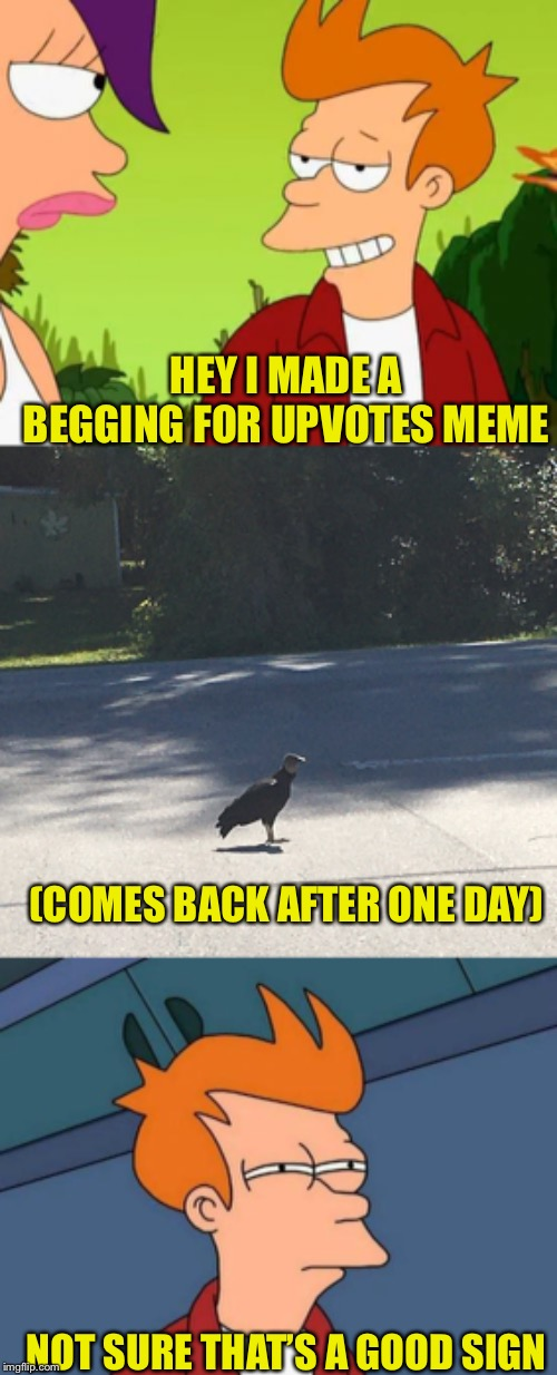 Really don't care about upvote begging one way or the other. Just wanted to use the photo of the vulture I took on vacation. :) | HEY I MADE A BEGGING FOR UPVOTES MEME NOT SURE THAT'S A GOOD SIGN (COMES BACK AFTER ONE DAY) | image tagged in memes,futurama fry,slick fry | made w/ Imgflip meme maker