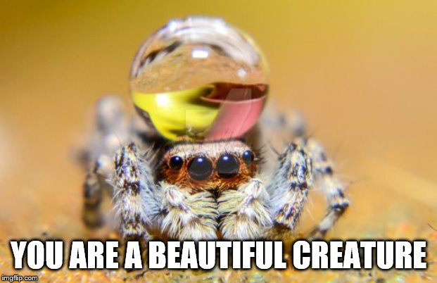 beautiful |  YOU ARE A BEAUTIFUL CREATURE | image tagged in beautiful,spider,insect | made w/ Imgflip meme maker