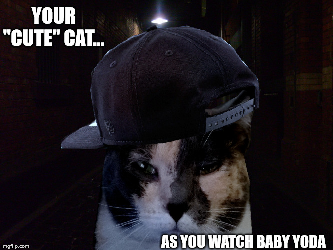 "Cat Star Wars | YOUR ""CUTE"" CAT... AS YOU WATCH BABY YODA 