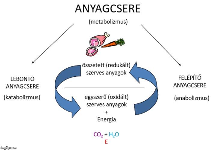11.3. Biológia SÁV: Az anyagcsere folyamatok áttekintése..