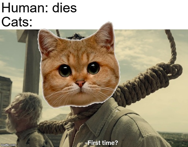 9 Lives | Human: diesCats: | image tagged in first time,cats | made w/ Imgflip meme maker