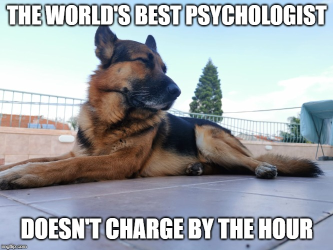 dogs make the best psychologists |  THE WORLD'S BEST PSYCHOLOGIST; DOESN'T CHARGE BY THE HOUR | image tagged in dog,psychologist,therapy | made w/ Imgflip meme maker