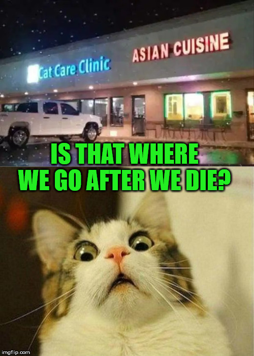 No good tasting at all |  IS THAT WHERE WE GO AFTER WE DIE? | image tagged in memes,scared cat | made w/ Imgflip meme maker