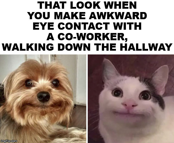 Awkward office moments |  THAT LOOK WHEN YOU MAKE AWKWARD EYE CONTACT WITH A CO-WORKER, WALKING DOWN THE HALLWAY | image tagged in awkward moment,socially awkward,eye contact,the office | made w/ Imgflip meme maker