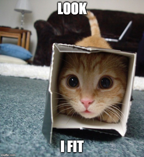 CATS WILL LAY ANYWHERE |  LOOK; I FIT | image tagged in cats,funny cats | made w/ Imgflip meme maker
