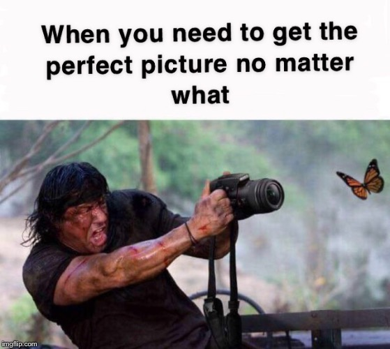 Gotta get that perfect photo | image tagged in perfect,rambo,memes,photography,butterfly,sylvester stallone | made w/ Imgflip meme maker