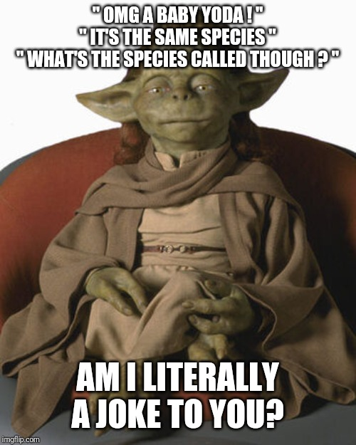 """ OMG A BABY YODA ! "" "" IT'S THE SAME SPECIES "" "" WHAT'S THE SPECIES CALLED THOUGH ? ""; AM I LITERALLY A JOKE TO YOU? 