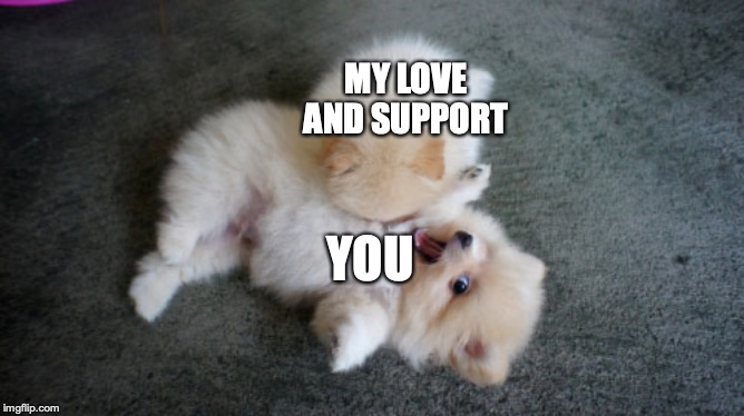 send this to ur best friend or ur significant other |  MY LOVE AND SUPPORT; YOU | image tagged in pomeranian,pom puppies,cute puppies,puppy,puppies,cute animals | made w/ Imgflip meme maker