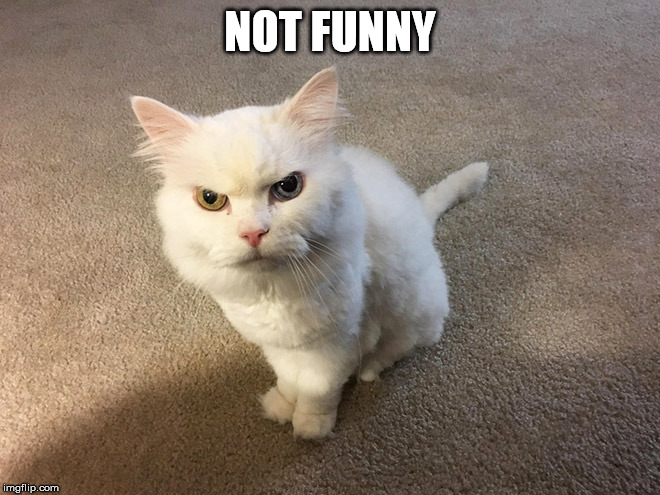 hate cat | NOT FUNNY | image tagged in hate cat | made w/ Imgflip meme maker