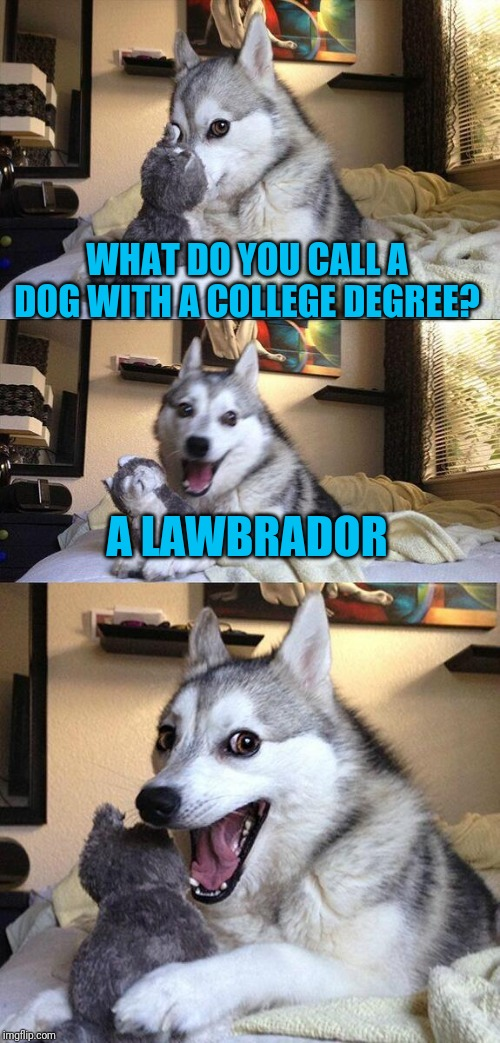 A Biology and Art Student Would Be a Labradoodle |  WHAT DO YOU CALL A DOG WITH A COLLEGE DEGREE? A LAWBRADOR | image tagged in memes,bad pun dog | made w/ Imgflip meme maker