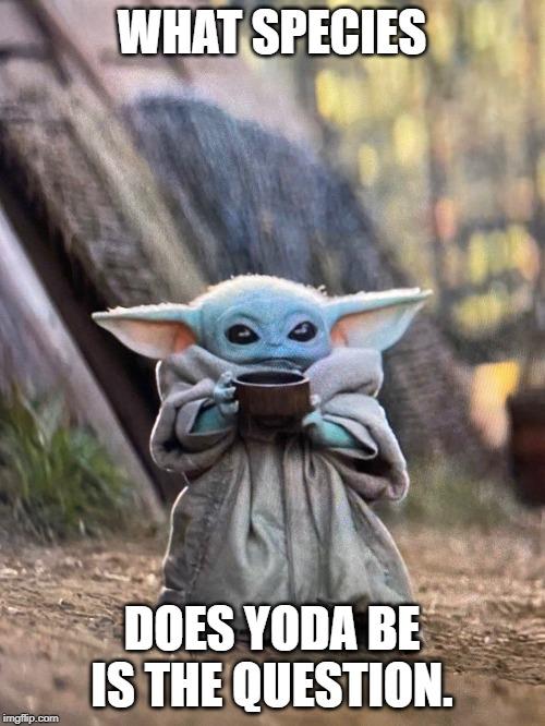 Image tagged in yoda,yaddle,star wars,mandalorian,jedi ...