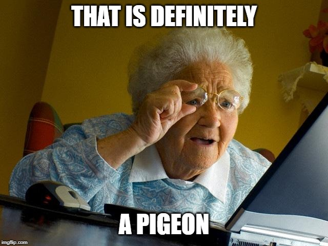 THAT IS DEFINITELY A PIGEON | image tagged in memes,grandma finds the internet | made w/ Imgflip meme maker
