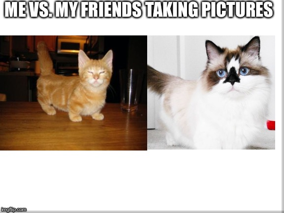 ME VS. MY FRIENDS TAKING PICTURES | image tagged in cats,comparison | made w/ Imgflip meme maker