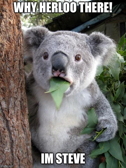 Surprised Koala |  WHY HERLOO THERE! IM STEVE | image tagged in memes,surprised koala | made w/ Imgflip meme maker