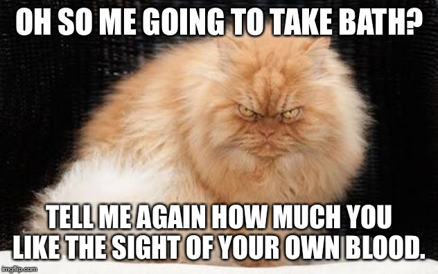 OH SO ME GOING TO TAKE BATH? TELL ME AGAIN HOW MUCH YOU LIKE THE SIGHT OF YOUR OWN BLOOD. | image tagged in evil cats | made w/ Imgflip meme maker