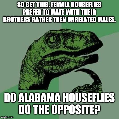 I know its stereotypical but it actually puzzles me. |  SO GET THIS. FEMALE HOUSEFLIES PREFER TO MATE WITH THEIR BROTHERS RATHER THEN UNRELATED MALES. DO ALABAMA HOUSEFLIES DO THE OPPOSITE? | image tagged in raptor,alabama,flies | made w/ Imgflip meme maker