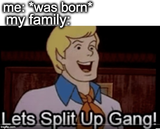 me: *was born* my family: | image tagged in divorce,memes,funny,scooby doo,oh wow are you actually reading these tags | made w/ Imgflip meme maker
