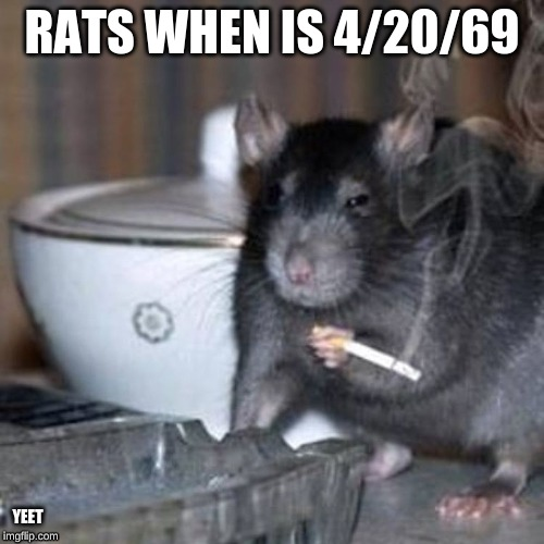 Rats |  RATS WHEN IS 4/20/69; YEET | image tagged in memes | made w/ Imgflip meme maker