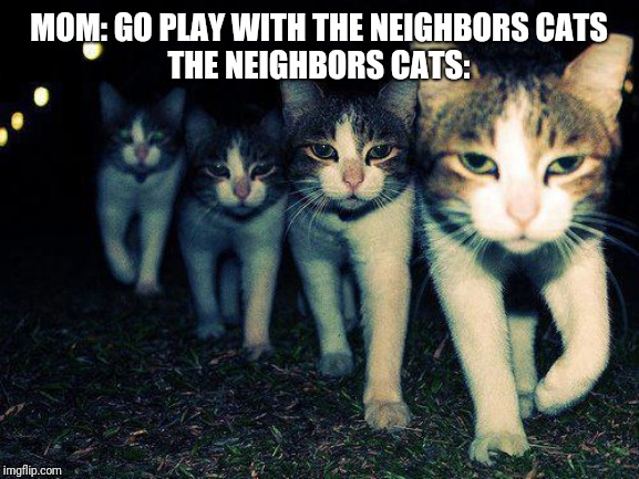 Wrong Neighboorhood Cats | MOM: GO PLAY WITH THE NEIGHBORS CATS THE NEIGHBORS CATS: | image tagged in memes,wrong neighboorhood cats | made w/ Imgflip meme maker