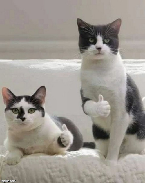 THUMBS UP CATS | image tagged in thumbs up cats | made w/ Imgflip meme maker