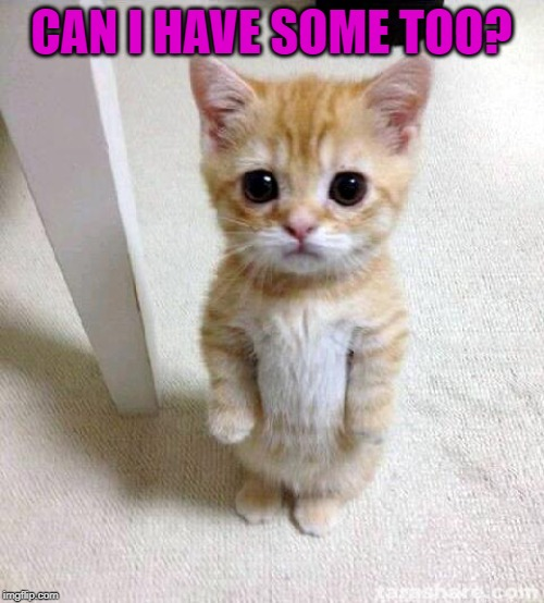 Cute Cat Meme | CAN I HAVE SOME TOO? | image tagged in memes,cute cat | made w/ Imgflip meme maker