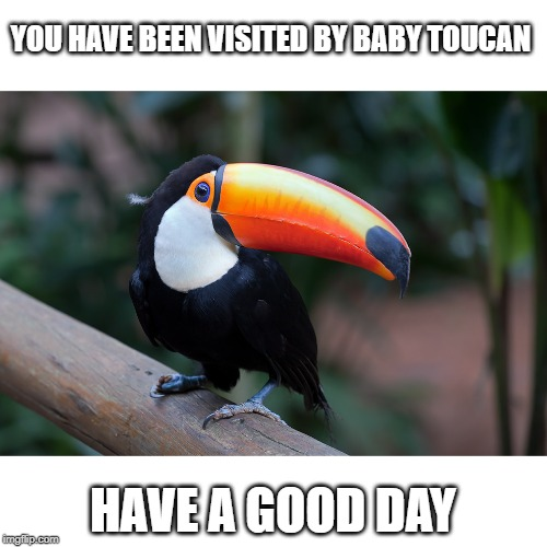 Baby toucan |  YOU HAVE BEEN VISITED BY BABY TOUCAN; HAVE A GOOD DAY | image tagged in wholesome,bird | made w/ Imgflip meme maker
