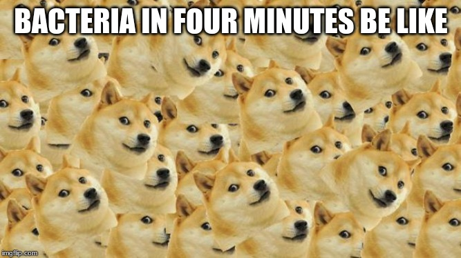 Multi Doge | BACTERIA IN FOUR MINUTES BE LIKE | image tagged in memes,multi doge | made w/ Imgflip meme maker