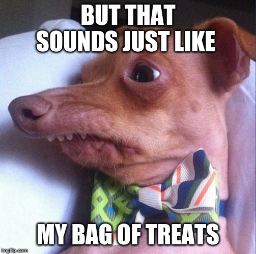Tuna the dog (Phteven) | BUT THAT SOUNDS JUST LIKE MY BAG OF TREATS | image tagged in tuna the dog phteven | made w/ Imgflip meme maker