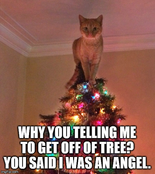 She sure is a star. |  WHY YOU TELLING ME TO GET OFF OF TREE? YOU SAID I WAS AN ANGEL. | image tagged in cats | made w/ Imgflip meme maker