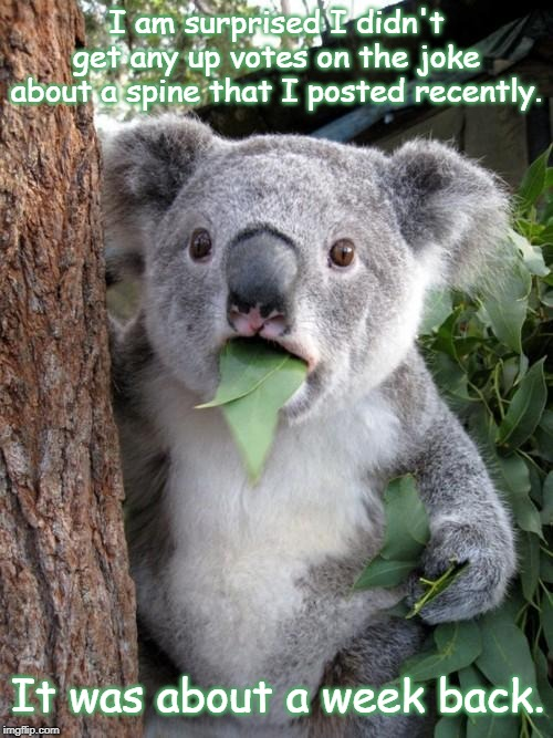 Surprised Koala |  I am surprised I didn't get any up votes on the joke about a spine that I posted recently. It was about a week back. | image tagged in memes,surprised koala | made w/ Imgflip meme maker