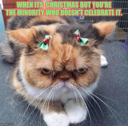 grumpy Christmas cat |  WHEN ITS  CHRISTMAS BUT YOU'RE THE MINORITY WHO DOESN'T CELEBRATE IT. | image tagged in grumpy christmas cat | made w/ Imgflip meme maker