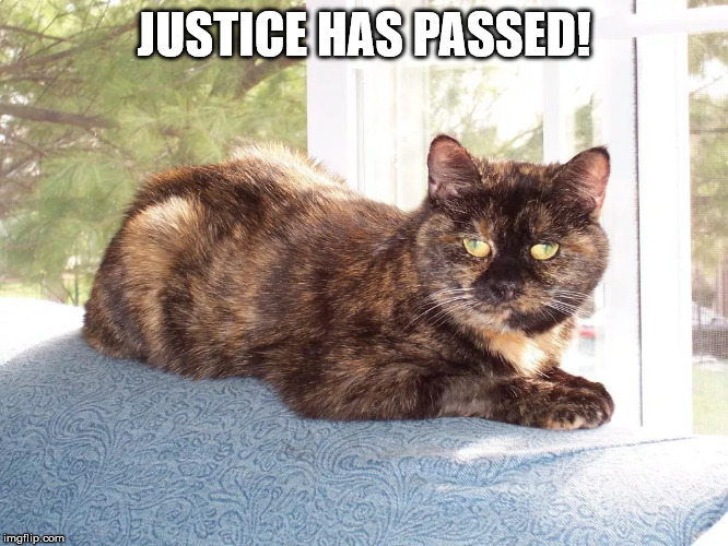 Cat | JUSTICE HAS PASSED! | image tagged in cat | made w/ Imgflip meme maker
