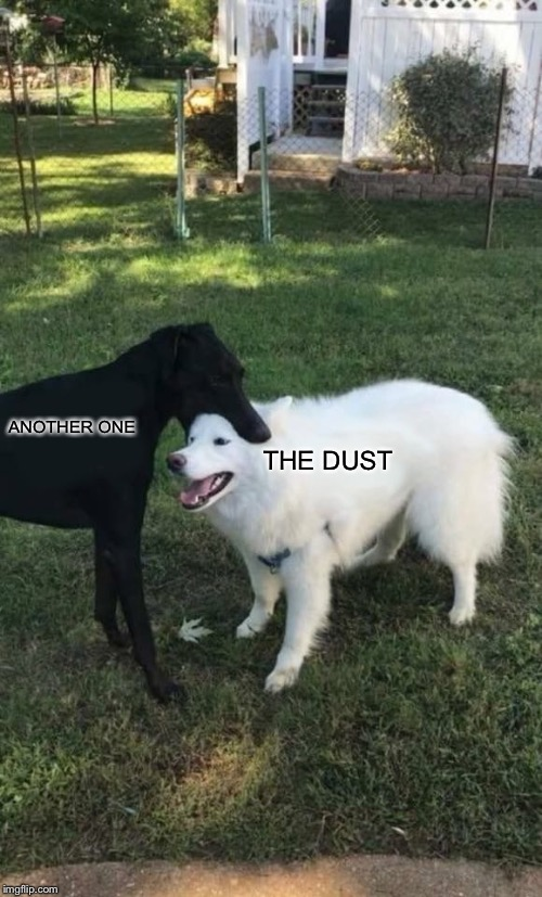 Another one gone and another one gone... | ANOTHER ONE THE DUST | image tagged in dog bite,another one bites the dust | made w/ Imgflip meme maker