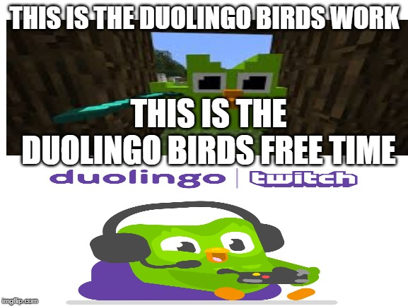blank white template | THIS IS THE DUOLINGO BIRDS WORK THIS IS THE DUOLINGO BIRDS FREE TIME | image tagged in blank white template | made w/ Imgflip meme maker