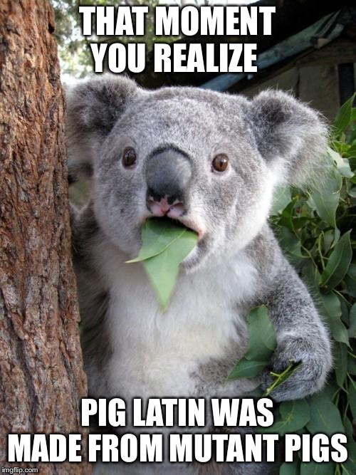 Surprised Koala |  THAT MOMENT YOU REALIZE; PIG LATIN WAS MADE FROM MUTANT PIGS | image tagged in memes,surprised koala | made w/ Imgflip meme maker