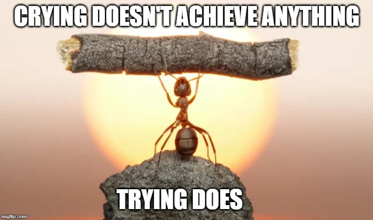 Trying | CRYING DOESN'T ACHIEVE ANYTHING TRYING DOES | image tagged in achievement,power,greatness,success | made w/ Imgflip meme maker