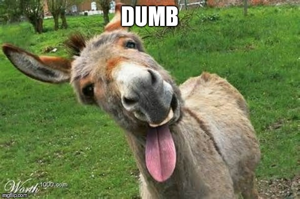 Laughing Donkey | DUMB | image tagged in laughing donkey | made w/ Imgflip meme maker