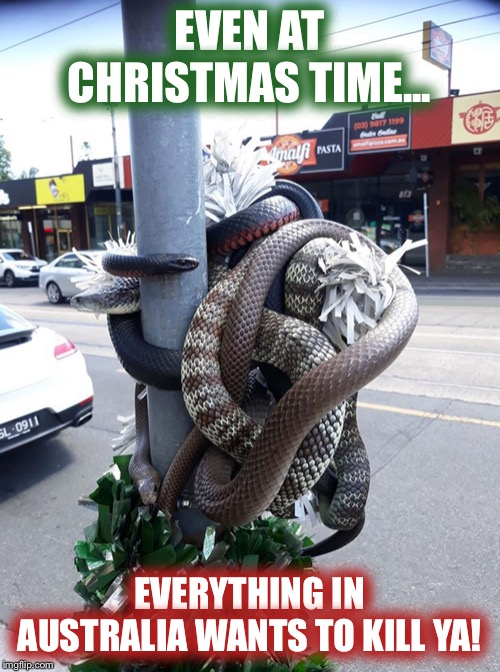 Proof that everything in Australia wants to kill ya! |  EVEN AT CHRISTMAS TIME... EVERYTHING IN AUSTRALIA WANTS TO KILL YA! | image tagged in christmas,meanwhile in australia,australia,snakes | made w/ Imgflip meme maker