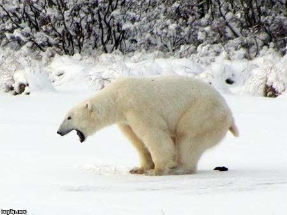 Polar Bear Shits in the Snow | image tagged in polar bear shits in the snow | made w/ Imgflip meme maker
