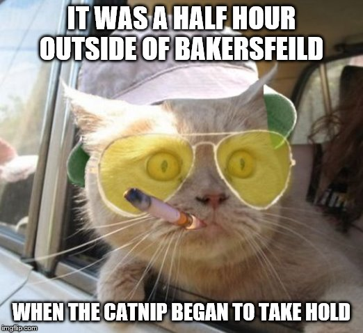 Fear And Loathing Cat | IT WAS A HALF HOUR OUTSIDE OF BAKERSFEILD WHEN THE CATNIP BEGAN TO TAKE HOLD | image tagged in memes,fear and loathing cat | made w/ Imgflip meme maker
