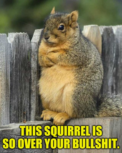 Cross-Armed Squirrel |  THIS SQUIRREL IS SO OVER YOUR BULLSHIT. | image tagged in squirrel,done,done with your bullshit | made w/ Imgflip meme maker