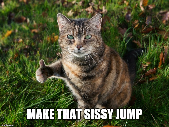 THUMBS UP CAT | MAKE THAT SISSY JUMP | image tagged in thumbs up cat | made w/ Imgflip meme maker