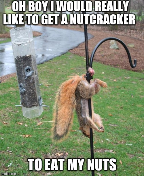 Squirrel NUTs  |  OH BOY I WOULD REALLY LIKE TO GET A NUTCRACKER; TO EAT MY NUTS | image tagged in squirrel nuts | made w/ Imgflip meme maker