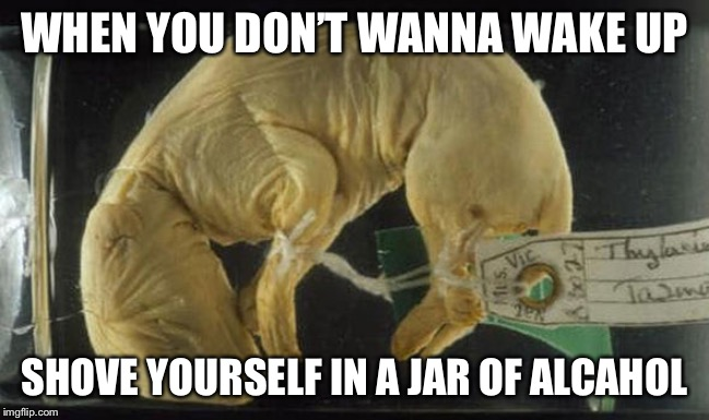 WHEN YOU DON'T WANNA WAKE UP; SHOVE YOURSELF IN A JAR OF ALCOHOL | image tagged in tired,australia | made w/ Imgflip meme maker