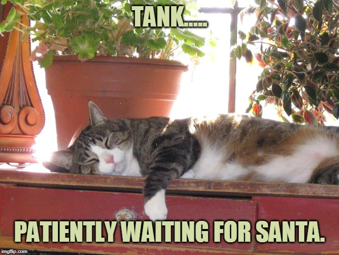 Tank.... |  TANK..... PATIENTLY WAITING FOR SANTA. | image tagged in facebook likes | made w/ Imgflip meme maker