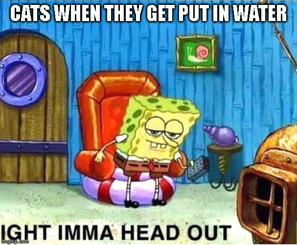 SpongeBob Ight Ima Head Out Babys Born |  CATS WHEN THEY GET PUT IN WATER | image tagged in spongebob ight ima head out babys born,cats | made w/ Imgflip meme maker