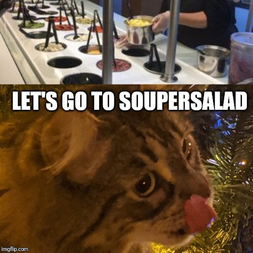 Let's go to soupersalad | LET'S GO TO SOUPERSALAD | image tagged in funny cat memes,cat,funny | made w/ Imgflip meme maker