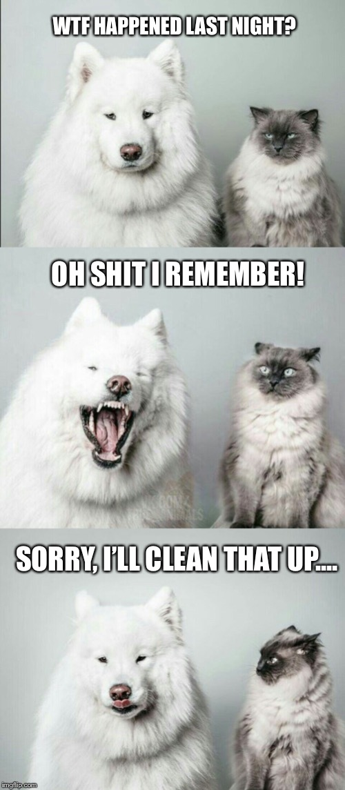 bad joke dog cat |  WTF HAPPENED LAST NIGHT? OH SHIT I REMEMBER! SORRY, I'LL CLEAN THAT UP.... | image tagged in bad joke dog cat | made w/ Imgflip meme maker
