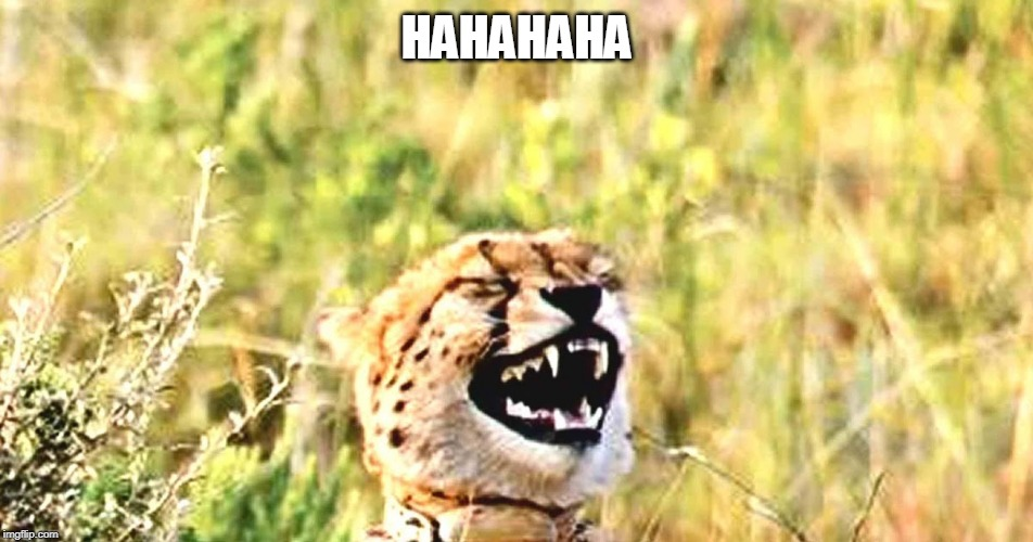 LAUGHING LEOPARD | HAHAHAHA | image tagged in laughing leopard | made w/ Imgflip meme maker